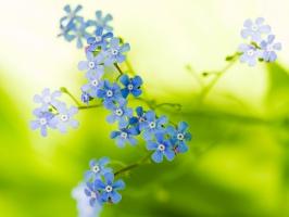 Green Beautiful Flowers