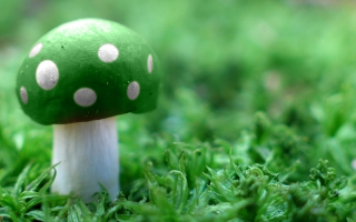 Green Mushroom Wide