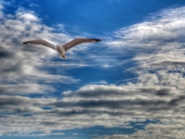 Gull Wallpaper Birds Animals
