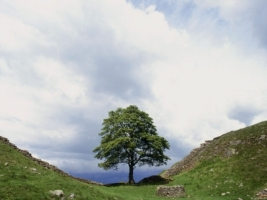 Hadrian s Wall Wallpaper England World