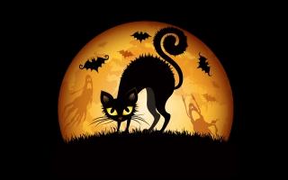 Halloween Cats Bats