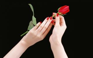Hands Rose