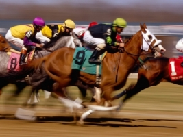Horse Racing Wallpaper Horses Animals