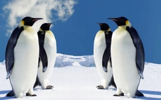 HQ Penguins