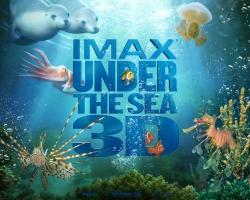 IMAX Under The Sea (4)