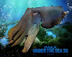IMAX Under The Sea (6)