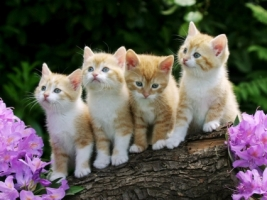 Kittens Wallpaper Cats Animals