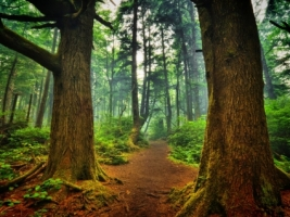 La Push forest Wallpaper Landscape Nature