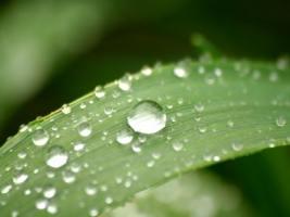 Leaf drops Wallpaper Plants Nature