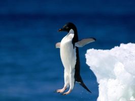 Leap of Faith Penguin