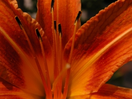 Light Fresh Orange