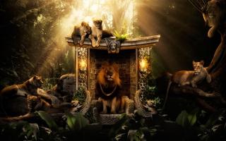 Lions Jungle