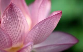 Lotus HD Wide