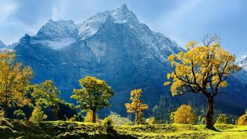 Maple Trees Snow Mountains Austria