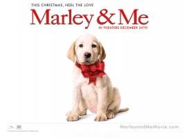 Marley & Me Dog