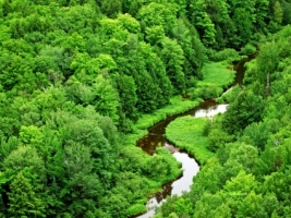 Meandering Stream Wallpaper Landscape Nature
