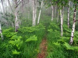 Misty Forest Wallpaper Landscape Nature