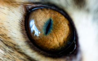 Mordor Eye