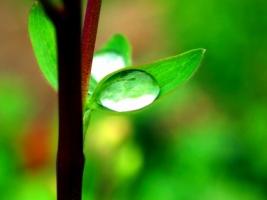 Morning dew Wallpaper Plants Nature