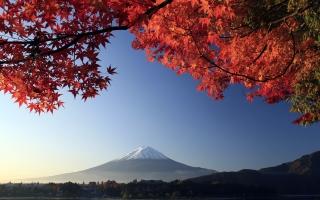 Mount Fuji Autumn Maple Japan