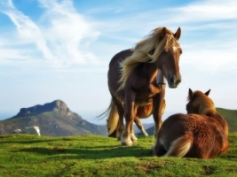 Mountain Horses Wallpaper Horses Animals