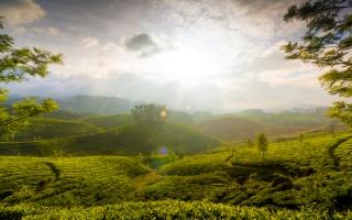 Munnar Hills Kerala India