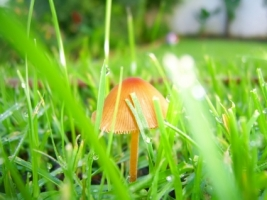 Mushroom in grass Wallpaper Plants Nature