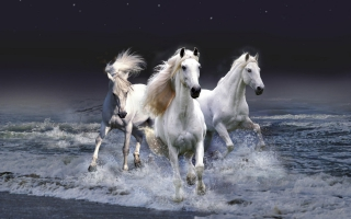 Horse Wallpaper Wallpapers For Free Download About 3020