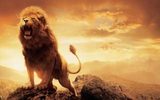 Narnia Lion Aslan