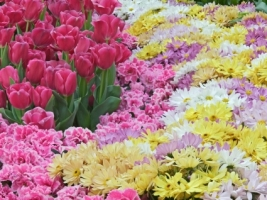 Natural Pastels Wallpaper Flowers Nature