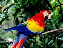 Nature Parrot