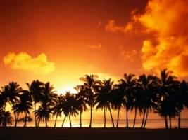 Palm Tree Sunset Wallpaper Landscape Nature