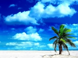 Palm Tree Wallpaper Beaches Nature