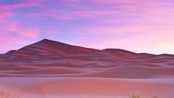 Palm trees Sahara Desert Morocco