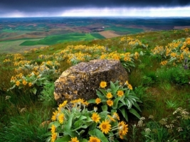 Palouse Farm Country Wallpaper Flowers Nature
