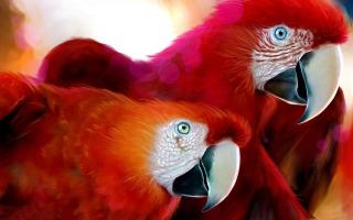 Parrots Widescreen