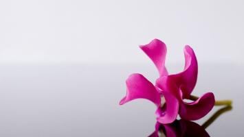 Pink Flower Alone