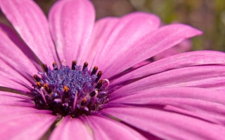 Pink flower wallpaper flowers nature wallpapers for free download pink flower hd wide mightylinksfo