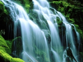 Proxy Falls Sodden Moss Wallpaper Waterfalls Nature