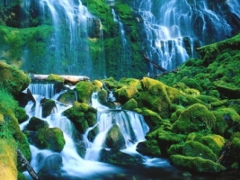 Proxy Falls Wallpaper Waterfalls Nature