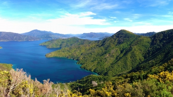Queen Charlotte Track Marlborough Sounds New Zealand