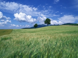 Quiet Fields Wallpaper Landscape Nature