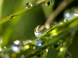 Rain drops Wallpaper Plants Nature