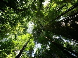 Rainforest canopy Wallpaper Plants Nature