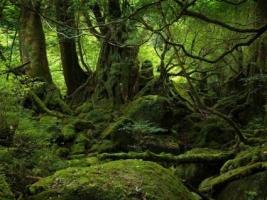 Rainforest Wallpaper Landscape Nature