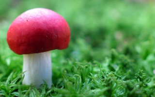 Red Mushroom in Green