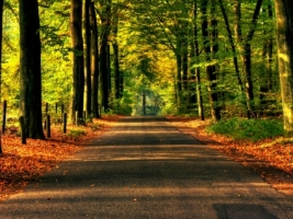 Road to Autumn Wallpaper Autumn Nature