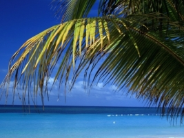 Roatan Beach Wallpaper Beaches Nature