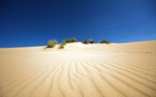 Sand Beauty