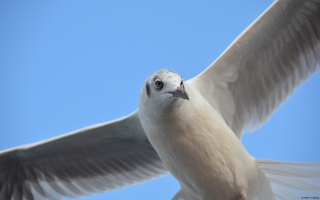 Seagull Windows 10